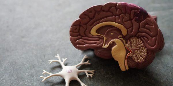 recuperación ictus cerebral