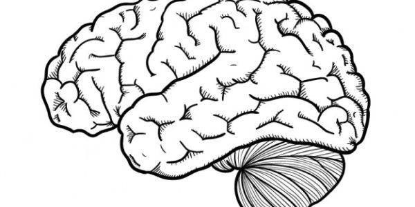 imagen de un cerebro dibujado a mano.